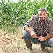 Stockfoto: Farmer kneeling by crops