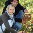 Stock Photo: Couple gathering mushrooms