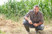 Farmář klečí plodiny — Stock fotografie
