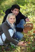 Couple gathering mushrooms — Stock Photo