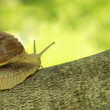 Snail on tree — Foto Stock
