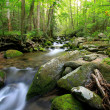 Stock Photo: Long stream in smokey mountains