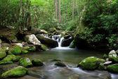 Cascading mountain stream — Stock Photo