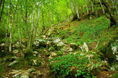Montenegrian forest — Stock Photo