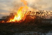 Sedges fire — Stock Photo