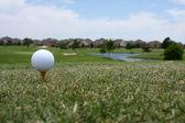 Balle de golf teed — Photo