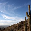 Saguaro Cactus in the Hills near Scottsdale — Stock Photo