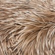 Royalty-Free Stock Photo: Emu feathers up close