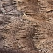 Emu feathers up close — Stock Photo #6926486