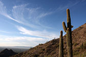 Saguaro Cactus in the Hills near Scottsdale — Stock Photo
