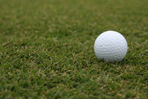 Golf Ball on the Grass — Stock Photo