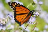 Close-up van vlinder — Stockfoto