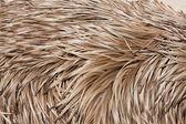 Emu feathers up close — Stock Photo