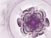 Weiche lila fraktal-blume — Stockfoto