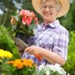 Portrait of pretty senior woman gardening — Stock Photo