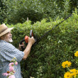 Senior clipping a hedge — Stock Photo