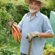 Senior gardener — Stock Photo #6844928