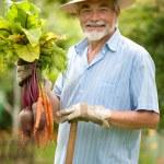 Senior gardener — Stock Photo