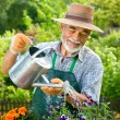 Portrait of senior man watering flowers — Stock Photo #6845482