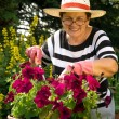 Senior lady in the garden — Stock Photo