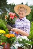 Porträt ziemlich senior frau gartenbau — Stockfoto