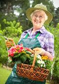 Gartenbau — Stockfoto