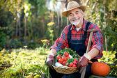 Gardening — Stockfoto