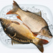 Freshly carp on ice - Stock Photo