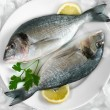 Gilt-head bream on ice — Stock Photo #6857114