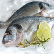Gilt-head bream on ice — Stock Photo