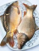 Freshly carp on ice — Stock Photo
