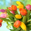 Bouquet of the fresh tulips — Stock Photo #6863377