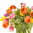 Stock Photo: Bouquet of the fresh tulips