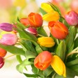 Bouquet of the fresh tulips — Stock Photo #6863427