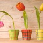 Tulips — Stock Photo #6863474
