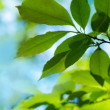 Fresh and green leaves - 图库照片