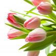 Fresh Pink Tulips — Stock Photo #6863860