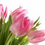 Fresh Pink Tulips — Stock Photo #6864004