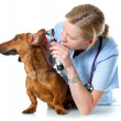 Royalty-Free Stock Photo: Veterinarian doctor