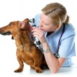 medico veterinario — Foto Stock