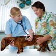 Veterinarian doctor — Stock Photo #6868683