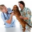 médico veterinario — Foto de Stock