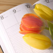 Tulip and calendar — Stock Photo