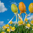 Easter eggs on the meadow — Stock Photo