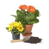 Flores en maceta con el equipo de jardinería — Foto de Stock