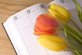 Tulip and calendar — Stock Photo