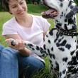Woman playing with the dog in park — Stockfoto
