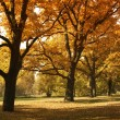 Beautiful autumn trees in city park — Stock Photo