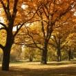 Beautiful autumn trees in city park — Stock Photo #6873815