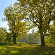 Beautiful autumn trees in city park — Foto de Stock